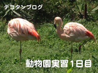 動物園実習
